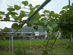 http://niwashigoto-hiroba.com/blog/images/CIMG2892.JPG